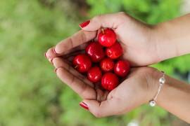 Kobieta trzyma w dłoniach dojrzałe wiśnie