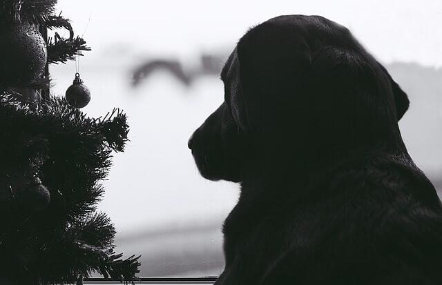 Pies patrzący przez okno