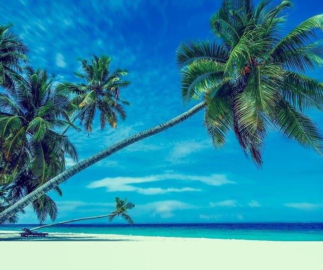 Święta pod palmami