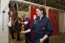 Kobieta-weterynarz stoi obok konia