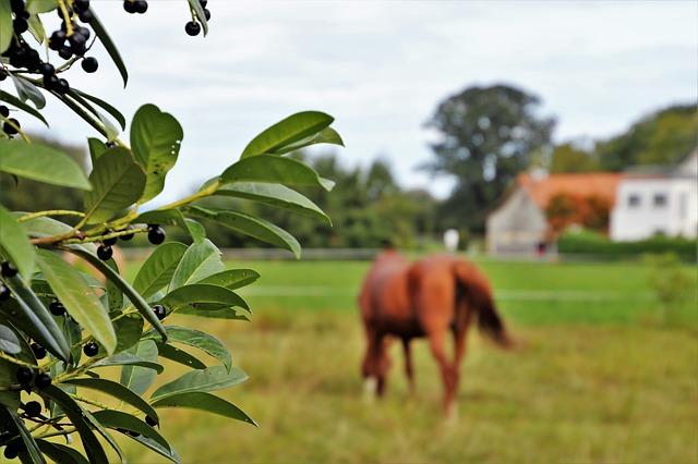 koń-farma-pasze-nawozy-rolnictwo