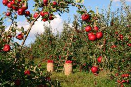 sad-owoce-nawóz-rolnictwo