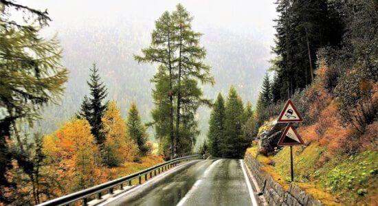 Znaki drogowe na drodze leśnej