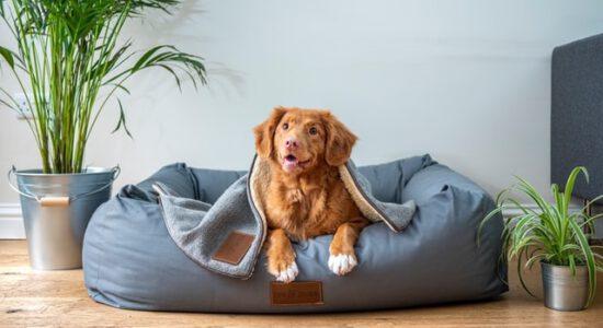 Pies w legowisku